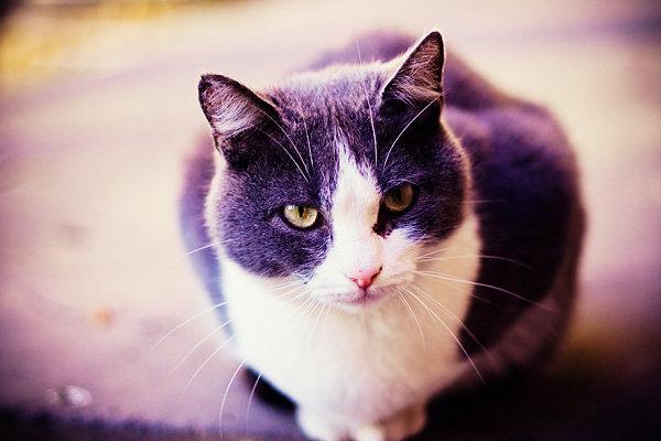 De vazut: 30 de poze cu pisicute - Poza 22