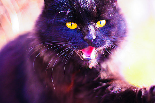 De vazut: 30 de poze cu pisicute - Poza 23