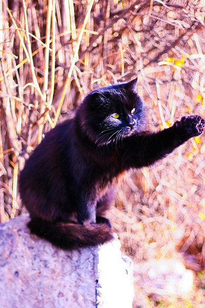 De vazut: 30 de poze cu pisicute - Poza 24