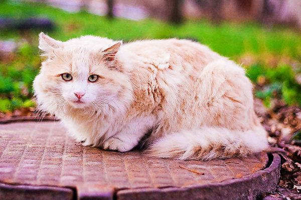 De vazut: 30 de poze cu pisicute - Poza 25