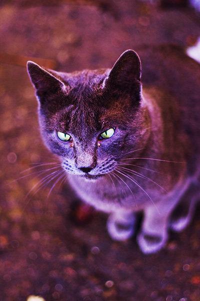 De vazut: 30 de poze cu pisicute - Poza 26