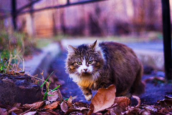 De vazut: 30 de poze cu pisicute - Poza 28