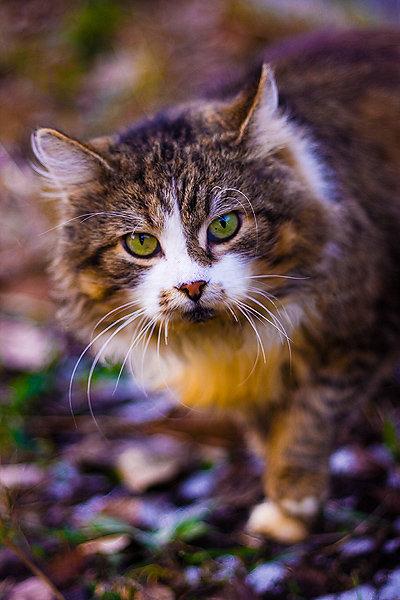 De vazut: 30 de poze cu pisicute - Poza 29