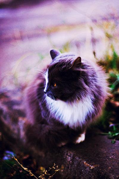 De vazut: 30 de poze cu pisicute - Poza 30