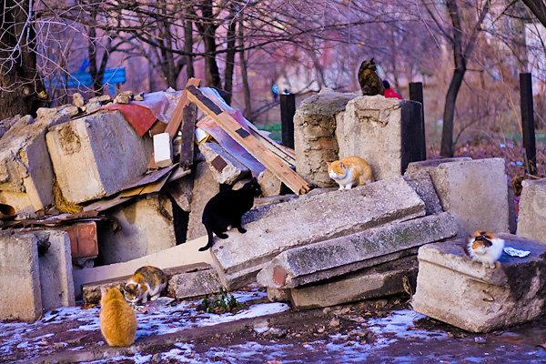 Pisicutele de strada, partea a II-a - Poza 6
