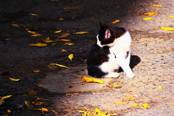 Pisicutele de strada, partea a II-a - Poza 14