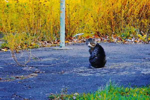 Pisicutele de strada, partea a II-a - Poza 25