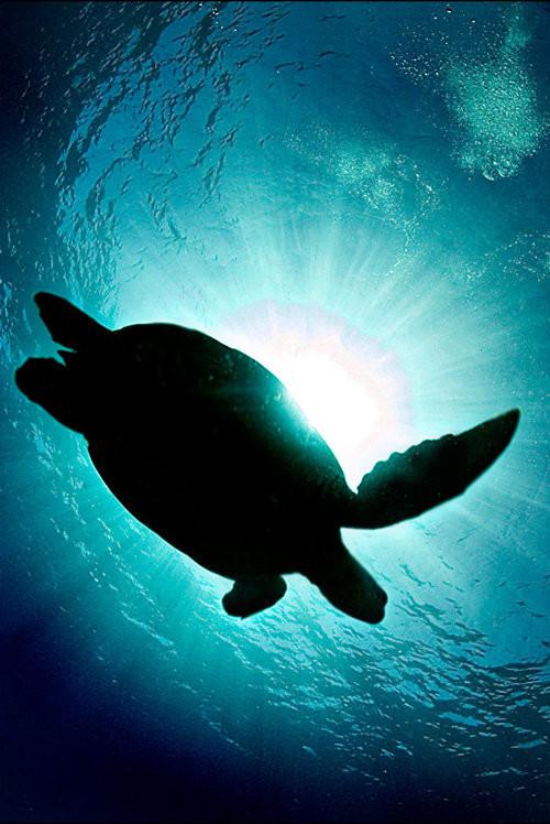 40 vederi splendide ale vietii marine - Poza 34