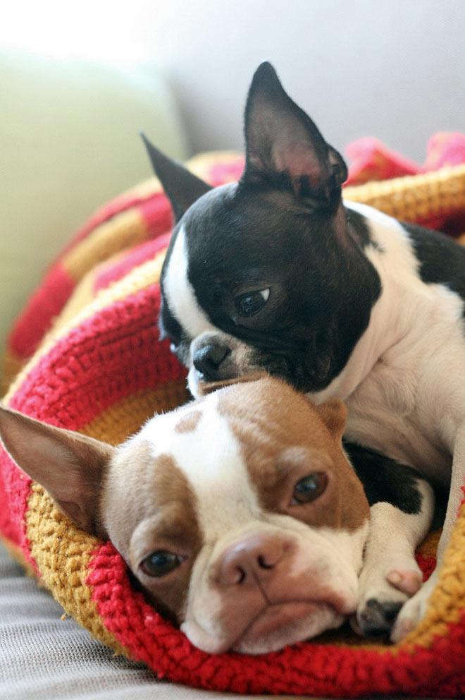 Doi catei adorabili: Coco si Plumm - Poza 2