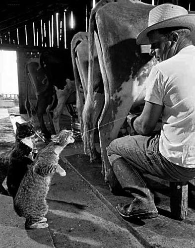 Animale simpatice - Poza 20