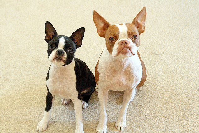 Doi catei adorabili: Coco si Plumm - Poza 5