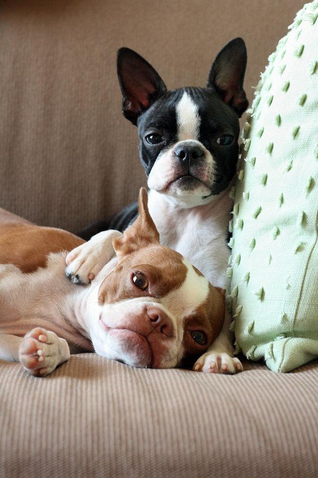 Doi catei adorabili: Coco si Plumm - Poza 9