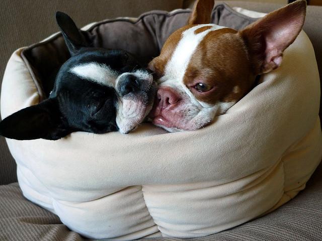 Doi catei adorabili: Coco si Plumm - Poza 11