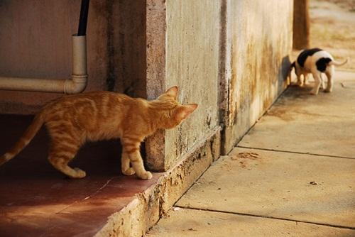 Caini si pisici in 22 de fotografii - Poza 1