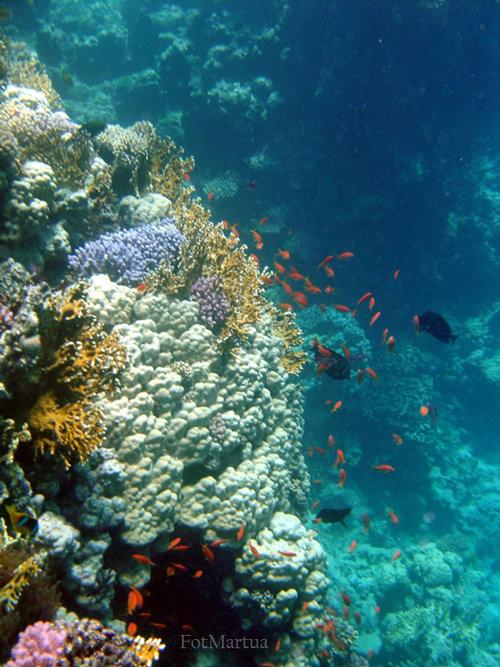 40 vederi splendide ale vietii marine