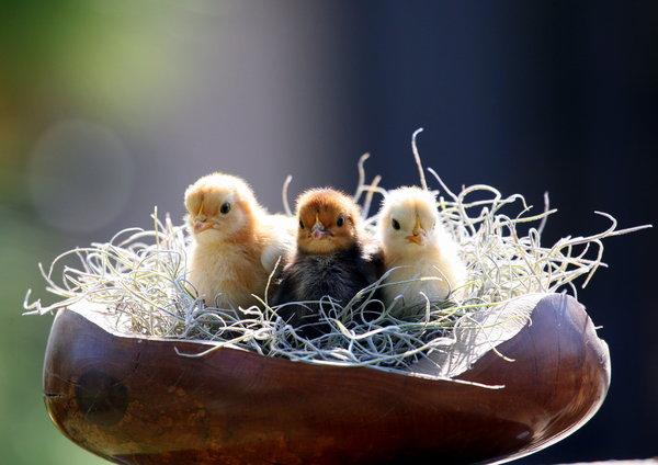 Atentie: Animale simpatice in 45 de poze! - Poza 1