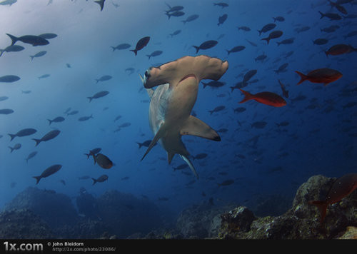 40 vederi splendide ale vietii marine - Poza 39