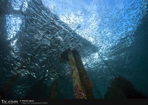 40 vederi splendide ale vietii marine - Poza 30