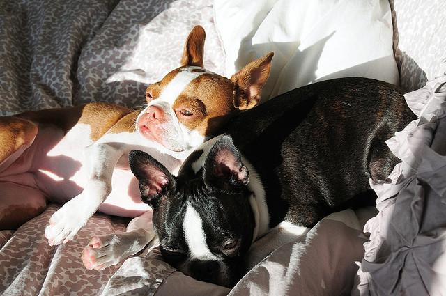 Doi catei adorabili: Coco si Plumm - Poza 26