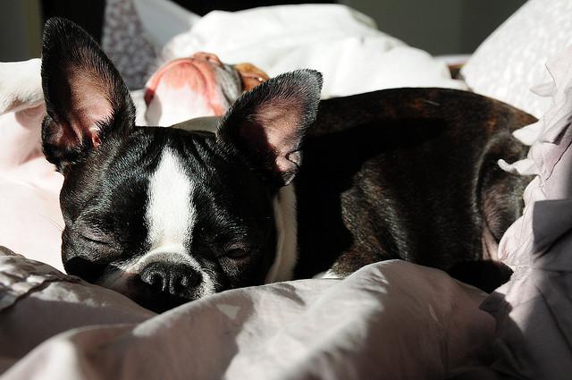 Doi catei adorabili: Coco si Plumm - Poza 27