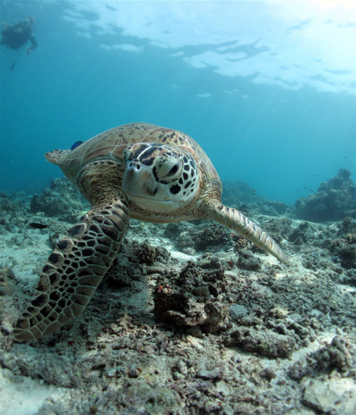 40 vederi splendide ale vietii marine - Poza 12
