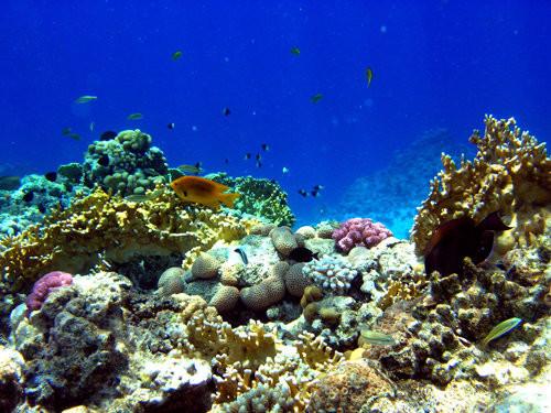 40 vederi splendide ale vietii marine - Poza 19