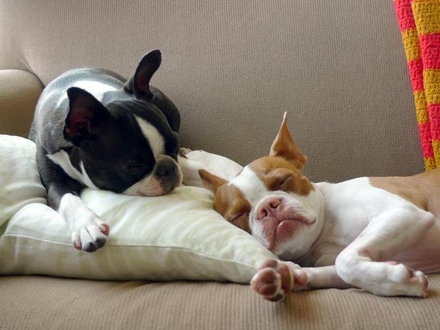 Doi catei adorabili: Coco si Plumm - Poza 43