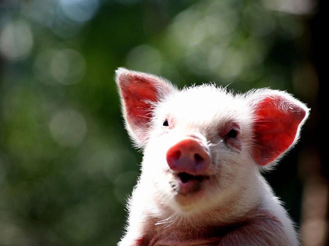 Atentie: Animale simpatice in 45 de poze! - Poza 4