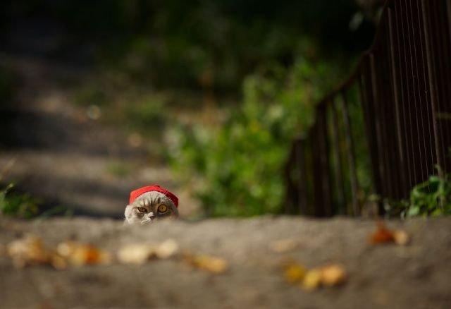 25 de poze cu animalute simpatice! - Poza 11