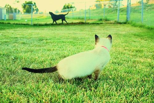 Caini si pisici in 22 de fotografii - Poza 4