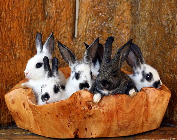 Atentie: Animale simpatice in 45 de poze! - Poza 2