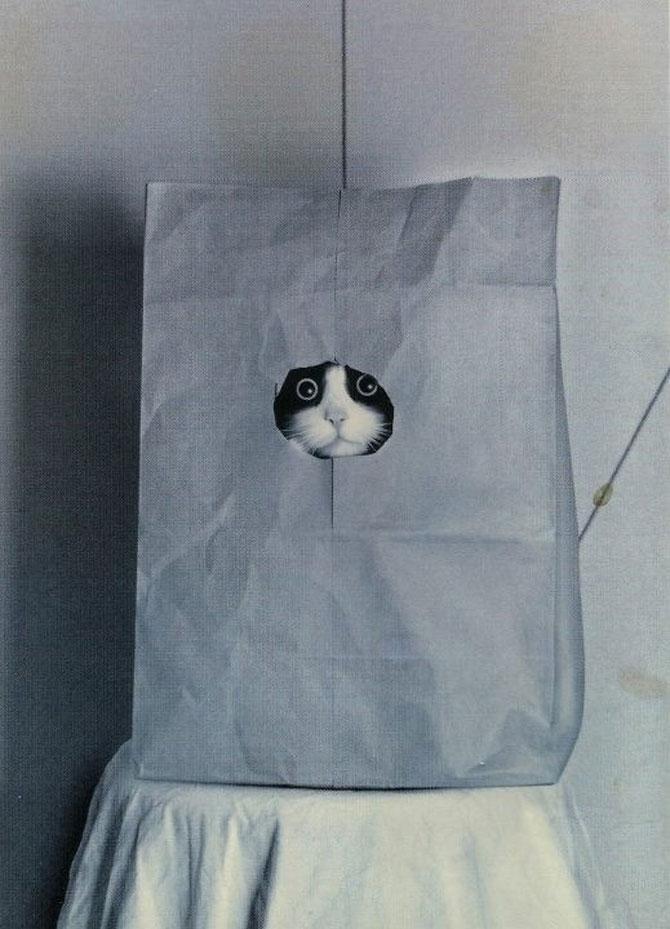 10 pisici antrenate pentru spionaj! - Poza 1