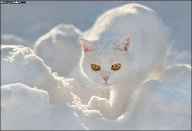 10 pisici antrenate pentru spionaj! - Poza 3