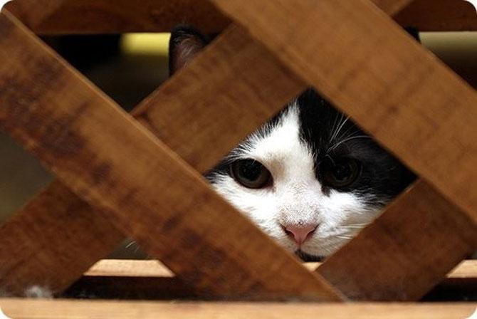 10 pisici antrenate pentru spionaj! - Poza 4