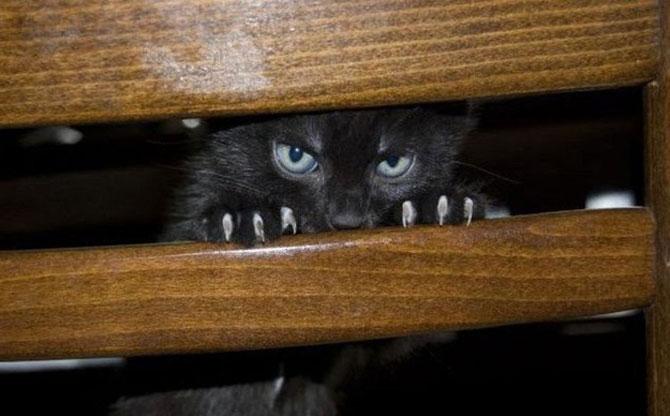 10 pisici antrenate pentru spionaj! - Poza 5
