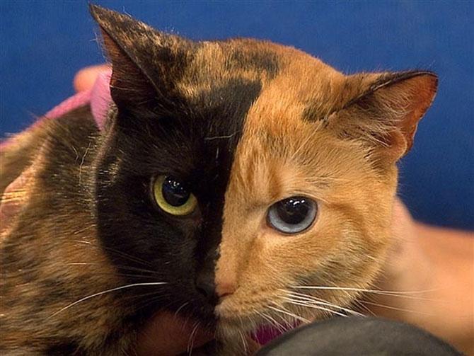 10 pisici antrenate pentru spionaj! - Poza 6