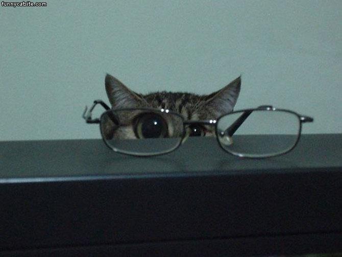 10 pisici antrenate pentru spionaj! - Poza 7