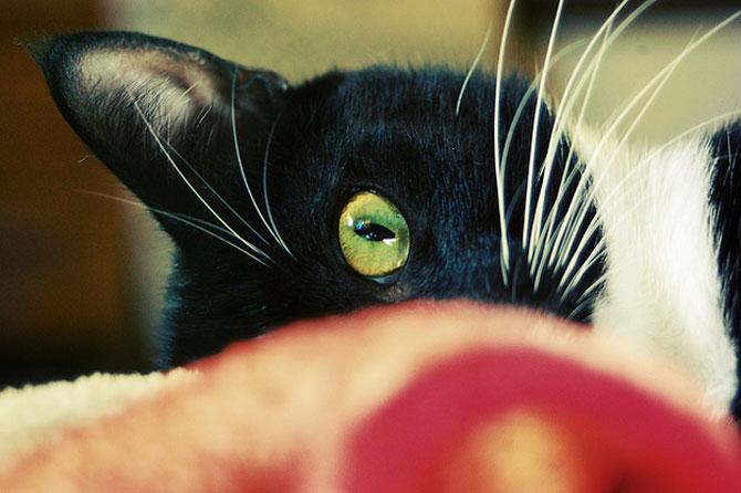 10 pisici antrenate pentru spionaj! - Poza 8