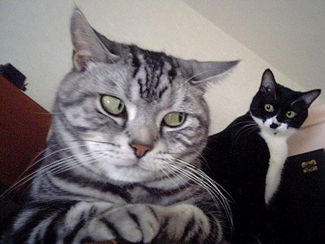 10 pisici antrenate pentru spionaj!