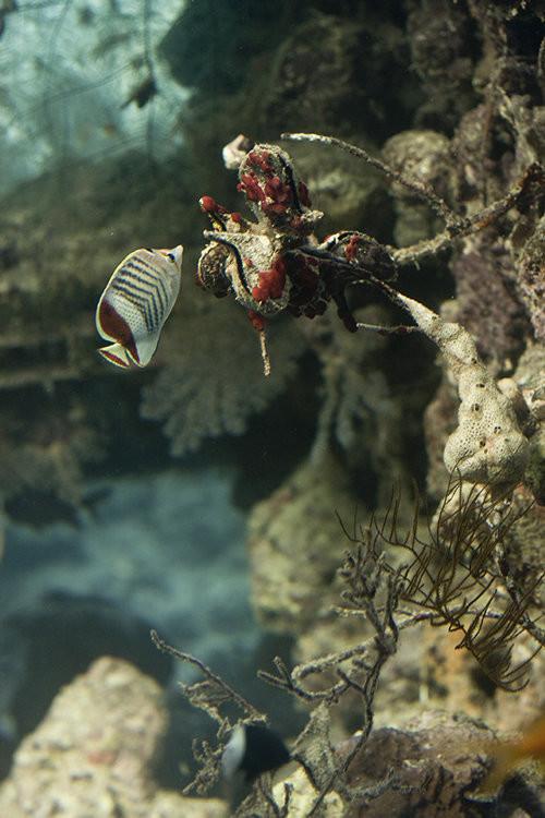 40 vederi splendide ale vietii marine - Poza 8