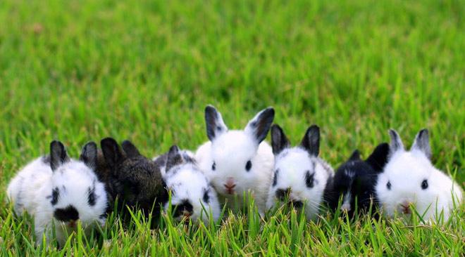 Atentie: Animale simpatice in 45 de poze! - Poza 3