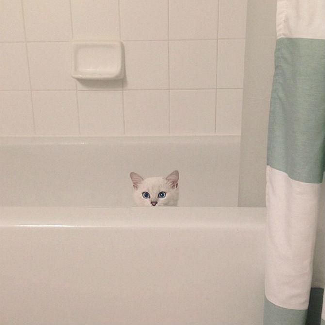Pisicuta cu cei mai frumosi ochi din lume - Poza 17