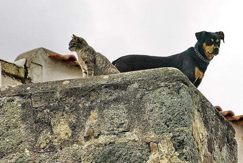 Caini si pisici in 22 de fotografii - Poza 6