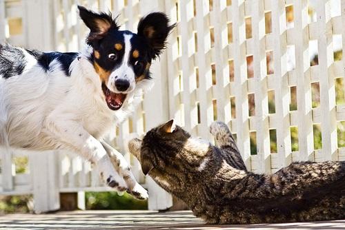 Caini si pisici in 22 de fotografii - Poza 7