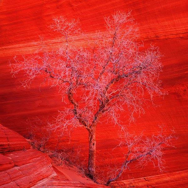 30 de fotografii extraordinare de Tomas Kaspar - Poza 2
