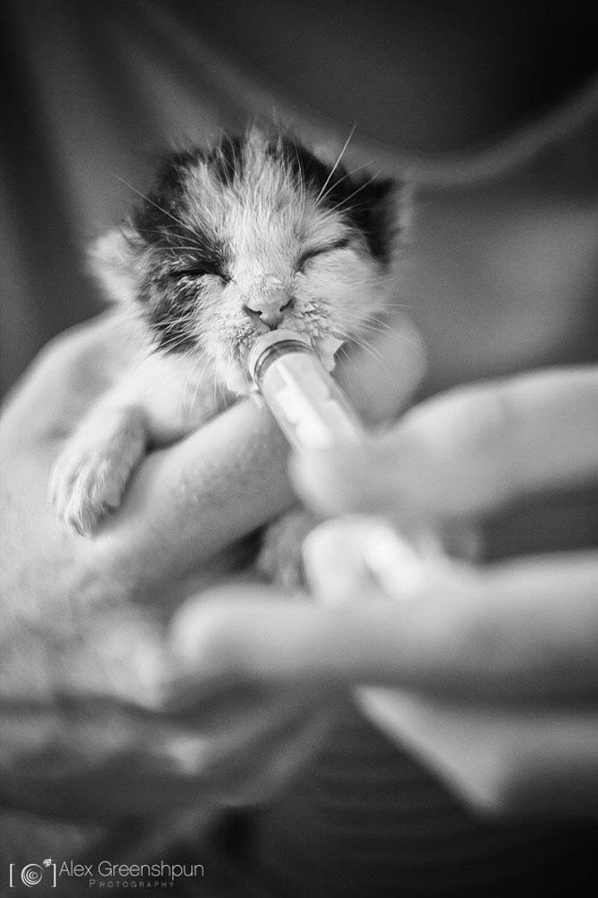 Micuta minune: Pisicuta salvata de fotograf - Poza 1