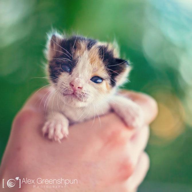 Micuta minune: Pisicuta salvata de fotograf - Poza 2
