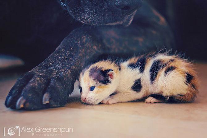 Micuta minune: Pisicuta salvata de fotograf - Poza 3