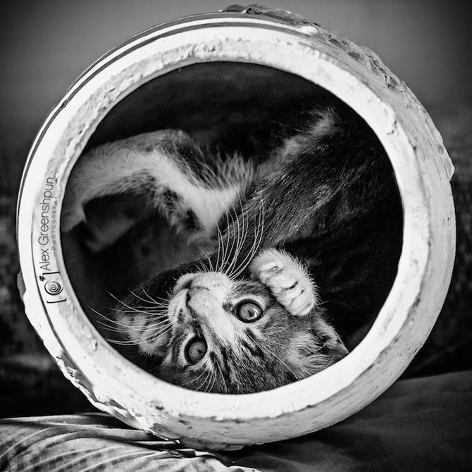 Micuta minune: Pisicuta salvata de fotograf - Poza 5