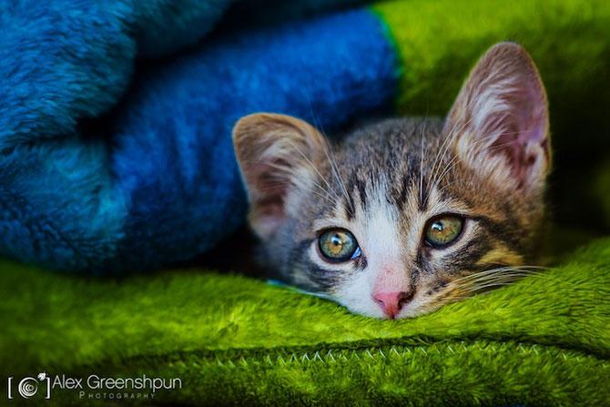 Micuta minune: Pisicuta salvata de fotograf - Poza 6